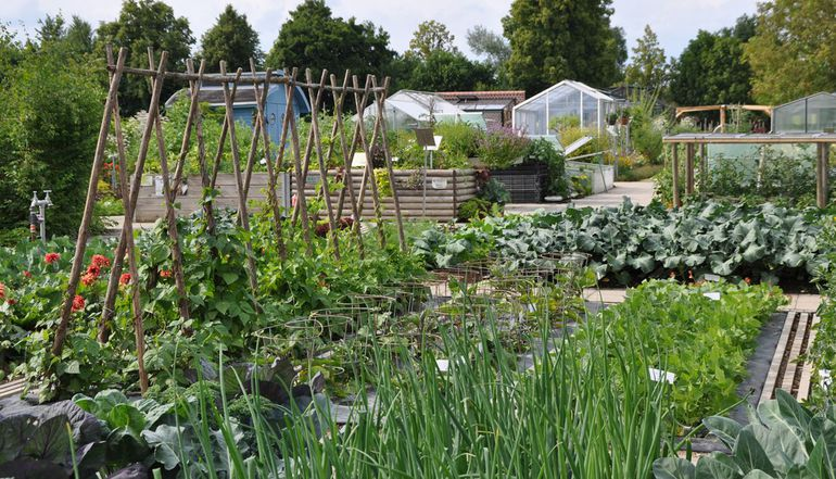 Vegetable beds and small greenhouses