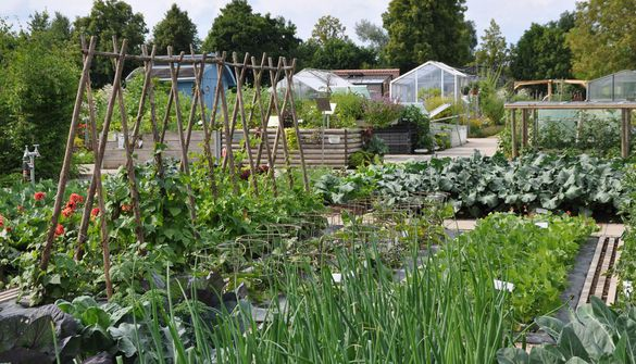 Vegetable plots and greenhouses