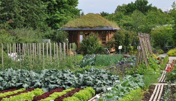 Summer house and vegetable plots