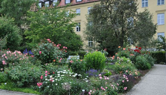 Rose garden in the Oberdieck Garden against the backdrop of the Löwentor building