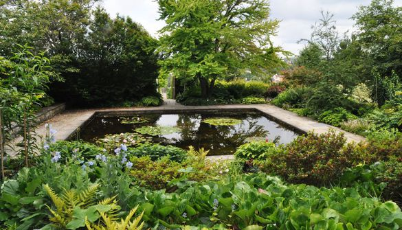 Pond in the Oberdieck Garden surrounded by kalmias and rhododendrons