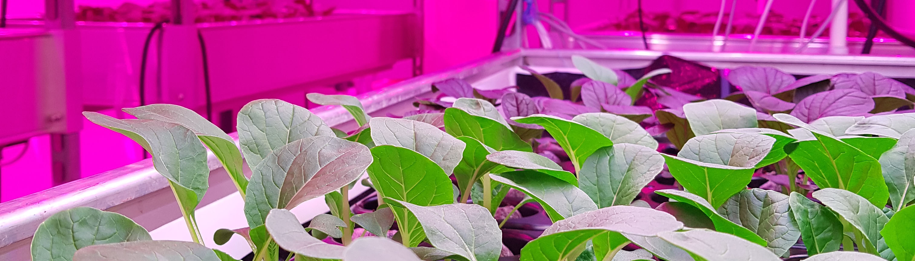 ASC Smart Indoor Farming